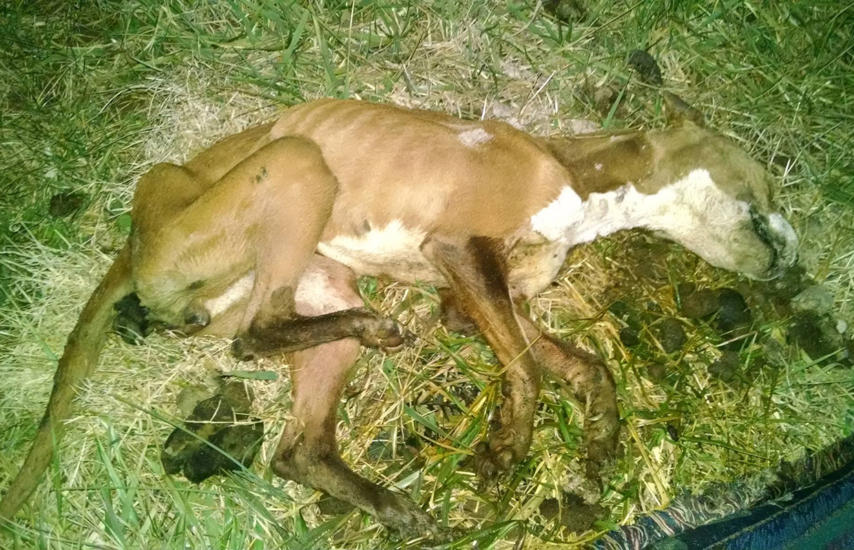 Woman finds starved, abandoned dog on Christian County ...