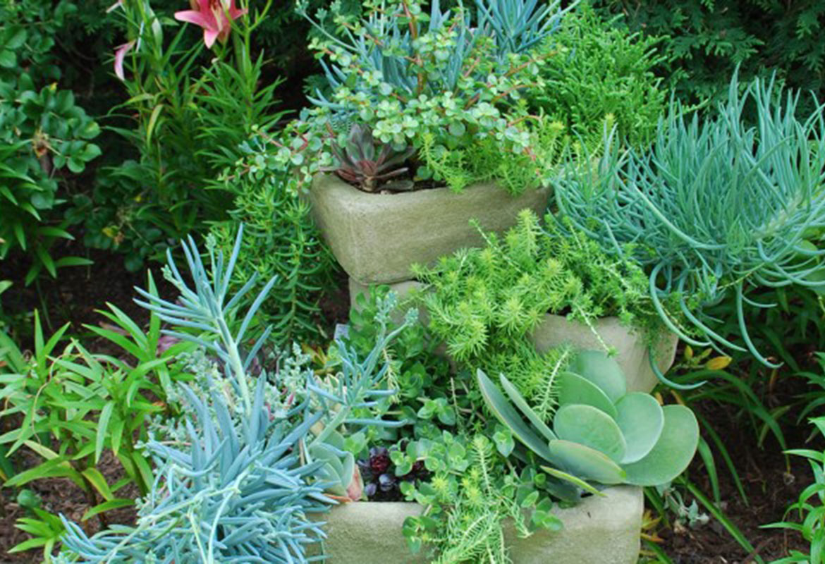 Master Gardeners Plant Sale Open To The Public
