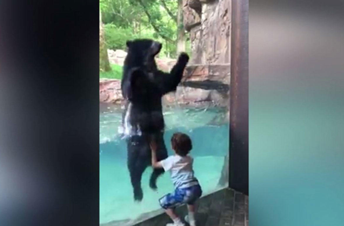 Adorable moment of bear jumping with little boy at the zoo