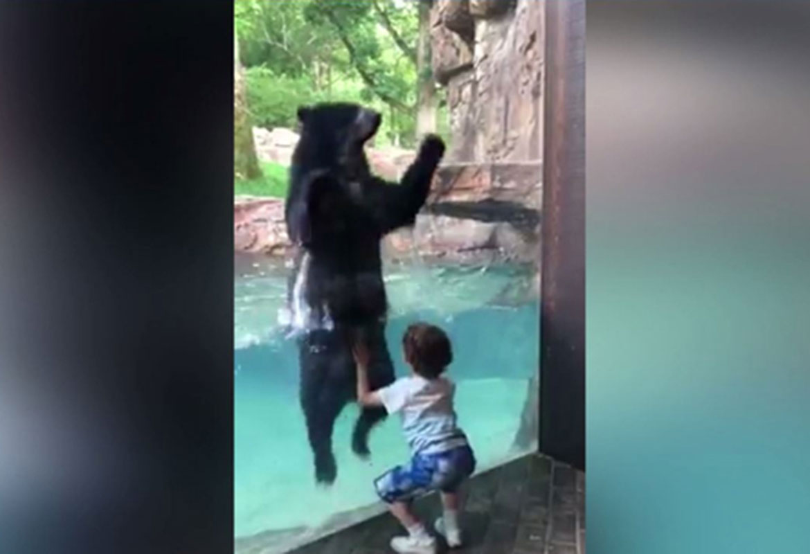 3743edd6d07c WATCH  Bear and boy  jump for joy  at Nashville zoo