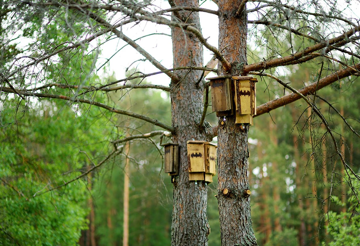 Learn to build a bat house at dunbar cave state park - Make a house a home ...