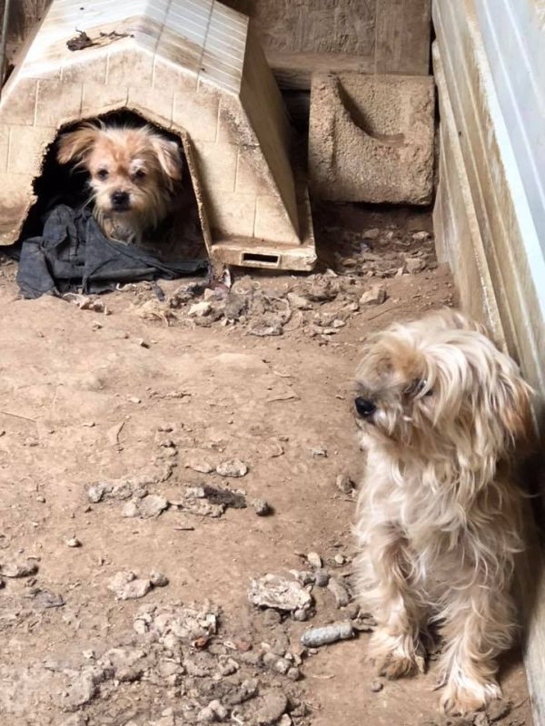 Shelter Over 100 Dogs Rescued From Tennessee Puppy Mill