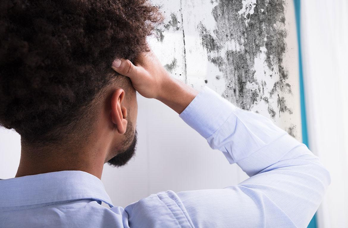 What To Do If You Find Mold In Your House