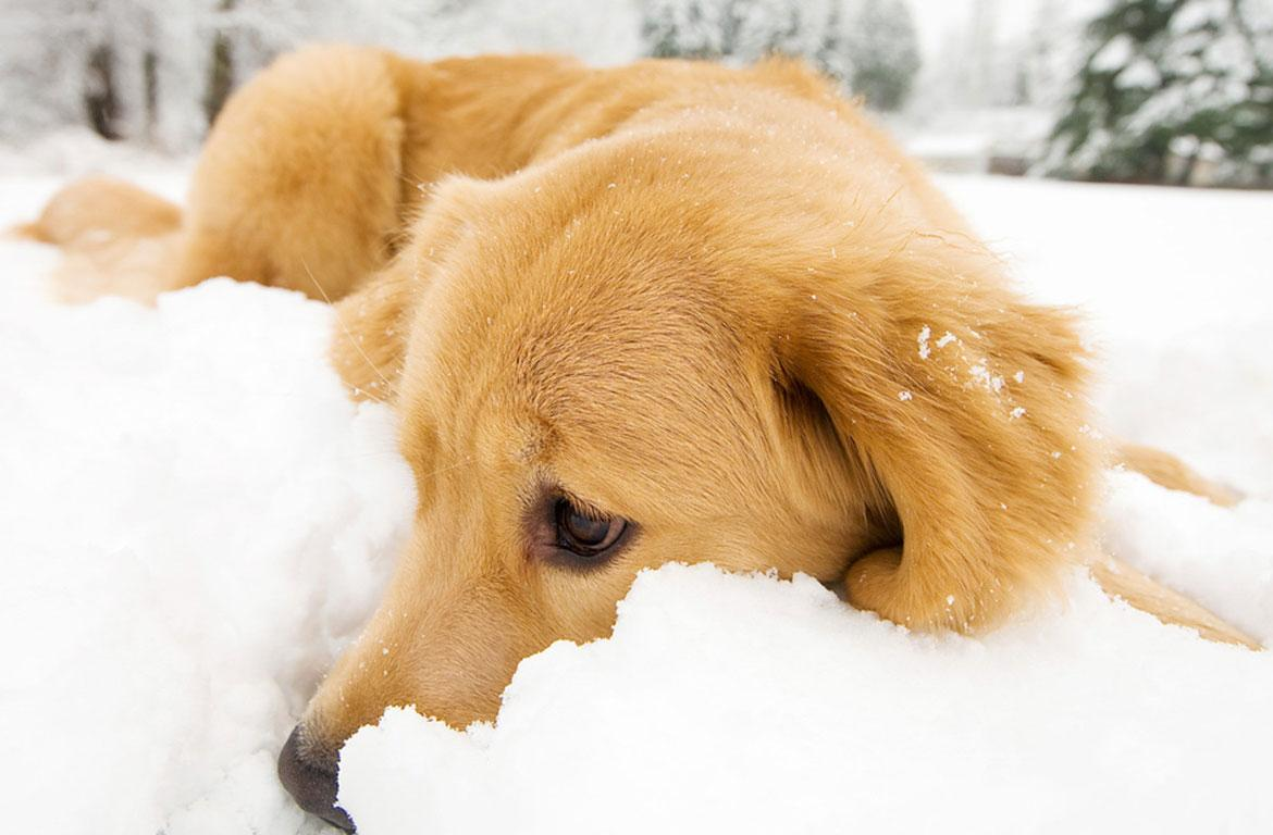 Montgomery County Animal Control issues cold weather safety