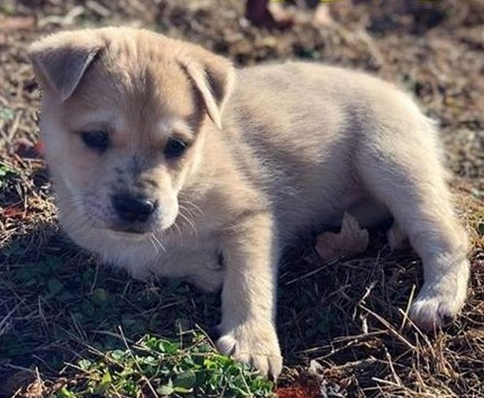 Pets of the Week | ClarksvilleNow com
