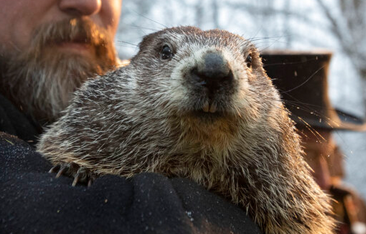 Punxsutawney Phil predicts an early spring after not seeing his shadow
